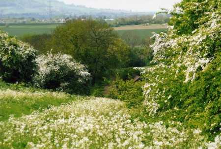 Spring on the Battlefield Margaret Nilsson